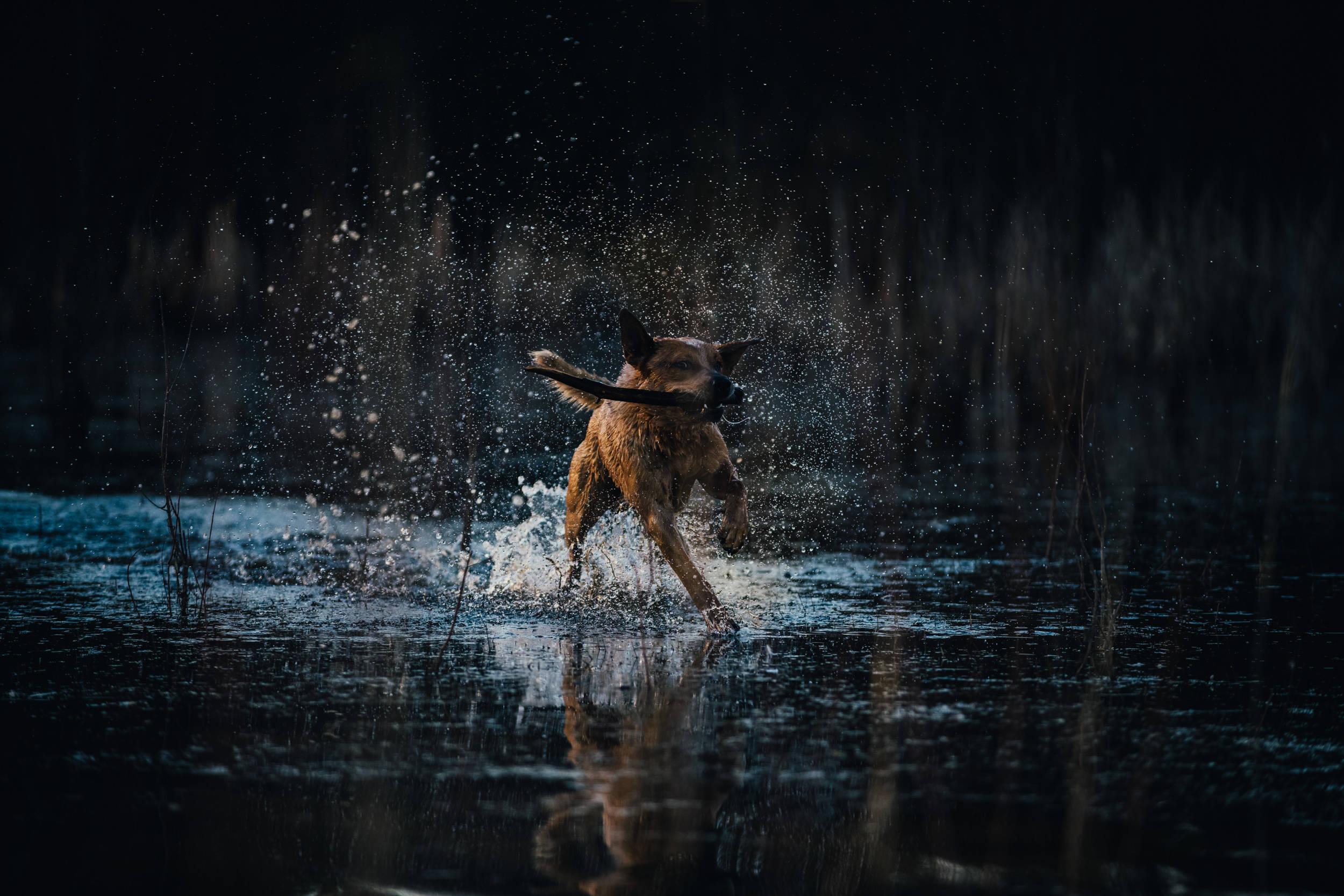 Bill -the water beast-