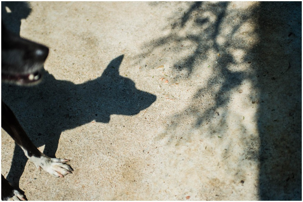 headrock, dogs, rescue, shelter, bang saphan, thailand, straathonden, opvangcentrum