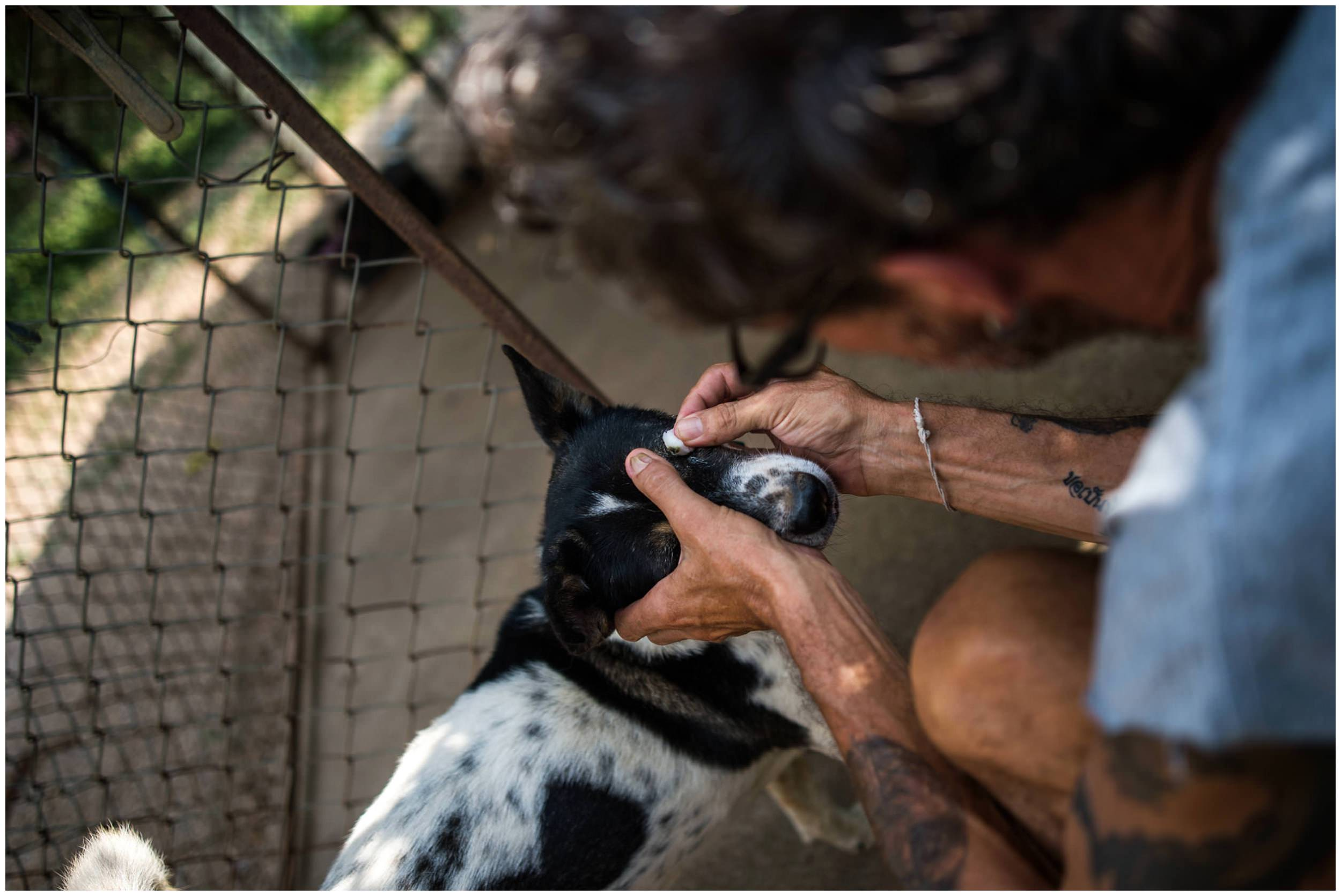 Headrock, dogs, shelter, rescue, people, hands, compassion, care, bang saphan, thailand, honden, straathonden, opvangcentrum, rehabilitatie, rehabilitation, asiel, verzorging, compassie, franz thomi, franziska thomi