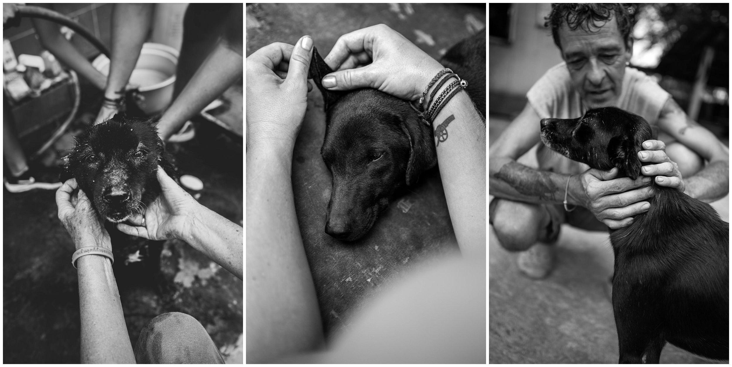 Headrock, dogs, shelter, rescue, people, hands, compassion, care, bang saphan, thailand, honden, straathonden, opvangcentrum, rehabilitatie, rehabilitation, asiel, verzorging, compassie, caitlin young, oskar kolm, jessica brunnberg, jena berg, alexa criste
