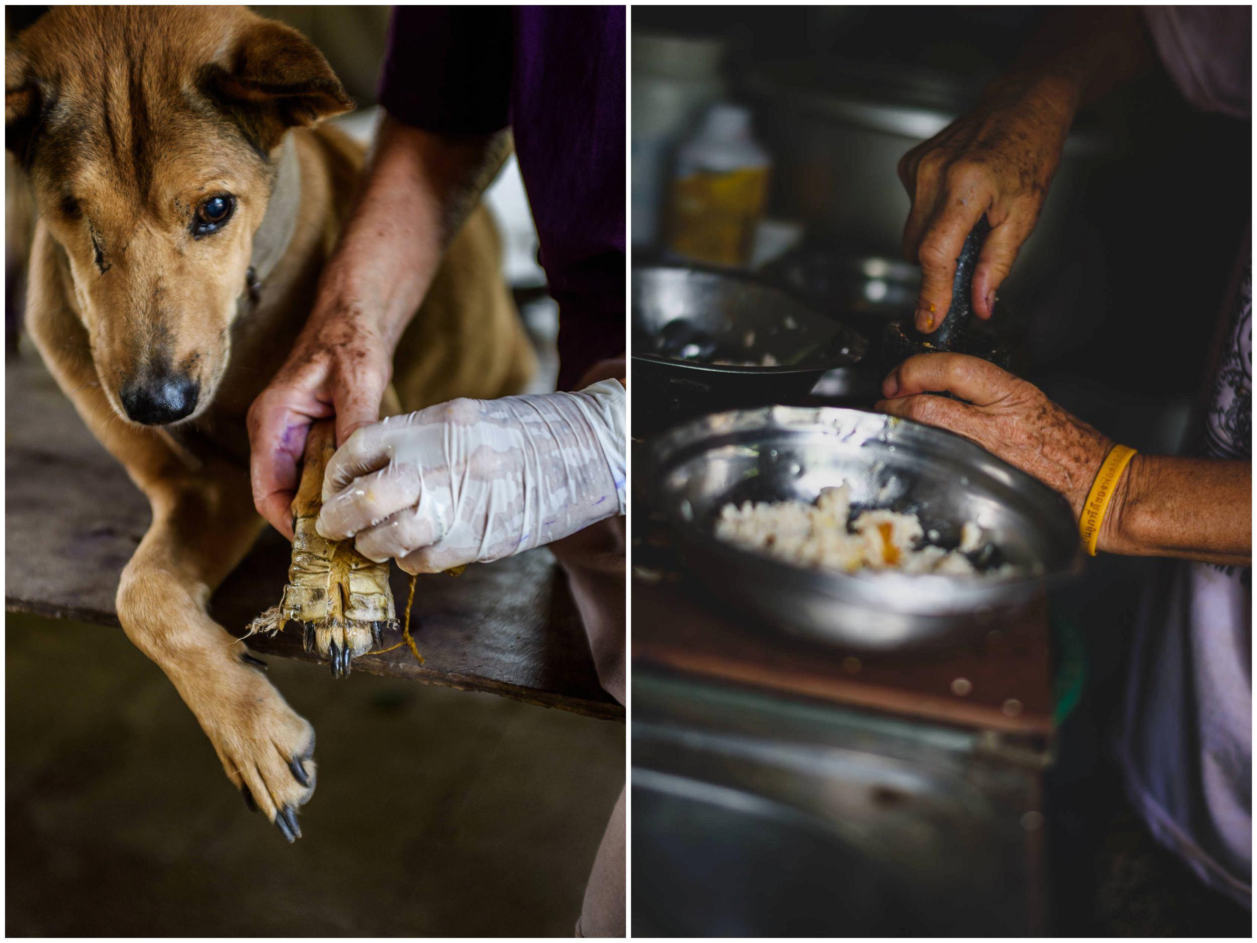 Headrock, dogs, shelter, rescue, people, hands, compassion, care, bang saphan, thailand, honden, straathonden, opvangcentrum, rehabilitatie, rehabilitation, asiel, verzorging, compassie, suthep sankuntod, hurricane tep, verity cattanach poole