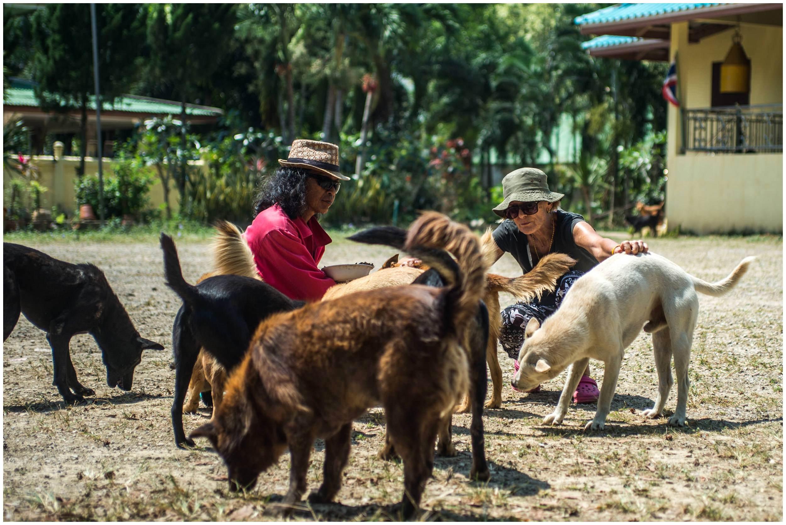 Headrock, dogs, shelter, rescue, people, hands, compassion, care, bang saphan, thailand, honden, straathonden, opvangcentrum, rehabilitatie, rehabilitation, asiel, verzorging, compassie, suthep sankuntod, hurricane tep, verity cattanach poole, temple