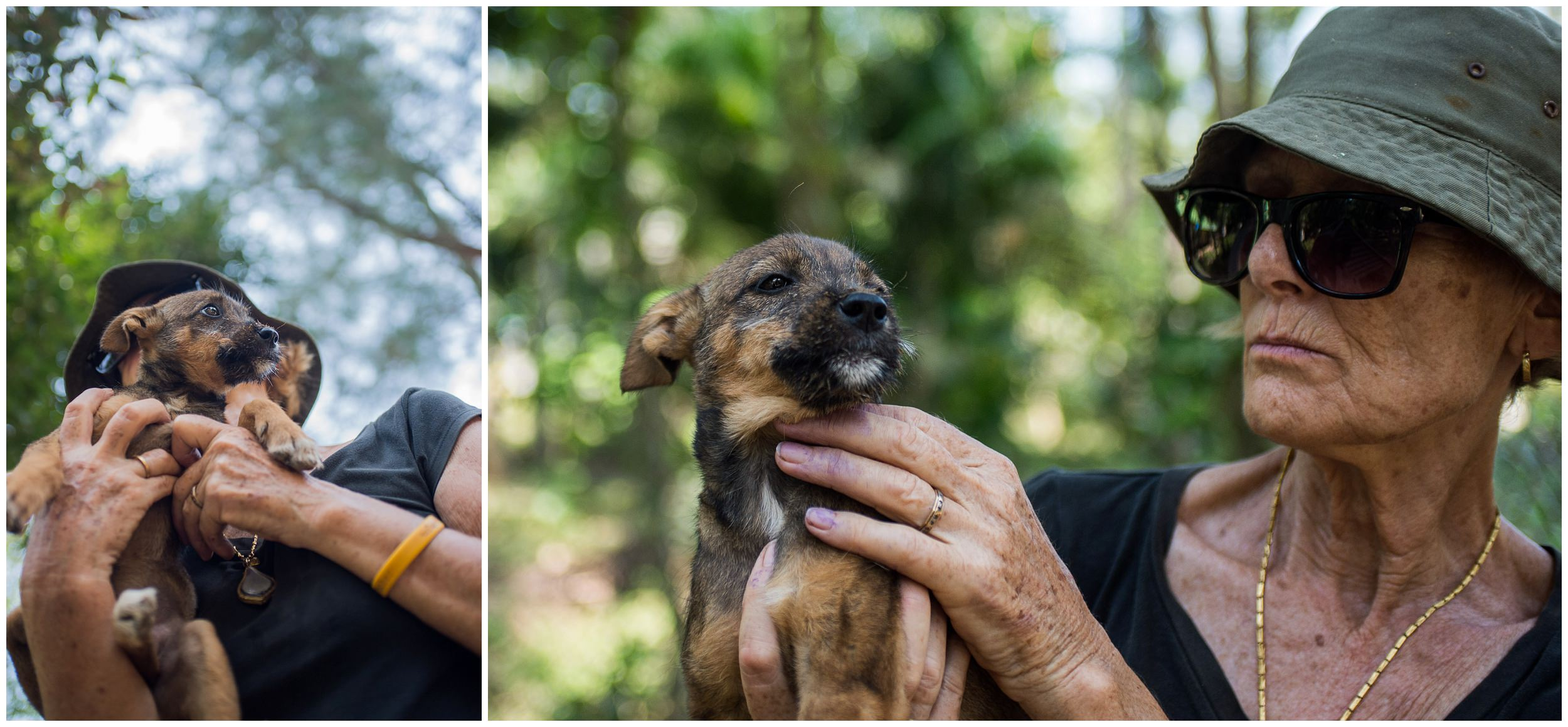 headrock, dog, rescue, shelter, puppies, temple, bang saphan, thailand, trixie