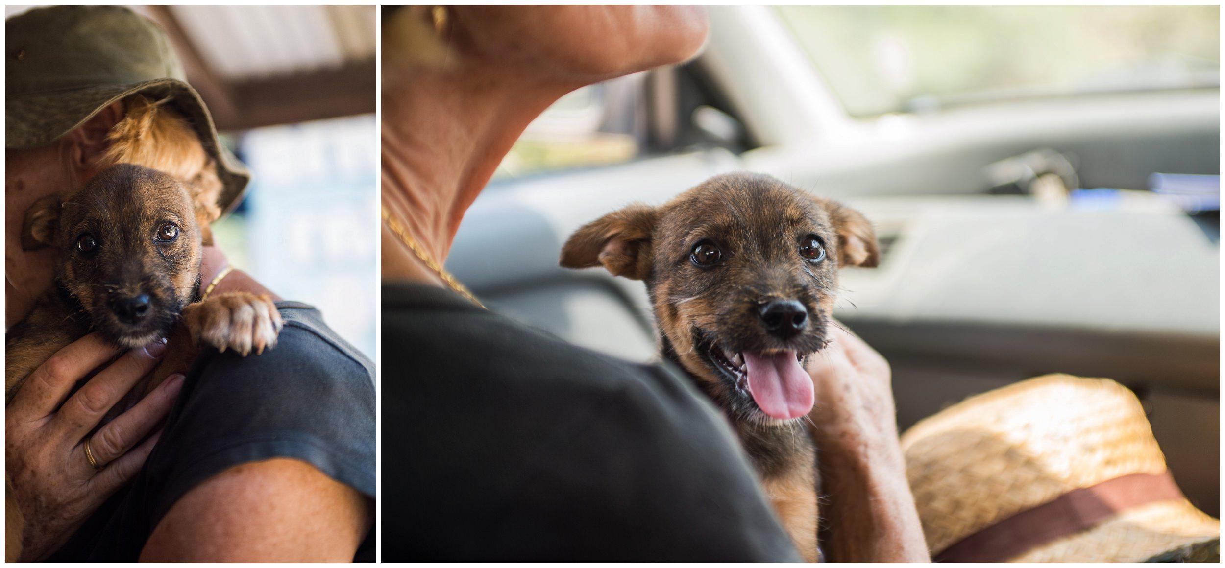 headrock, dog, rescue, shelter, puppies, temple, bang saphan, thailand, trixie