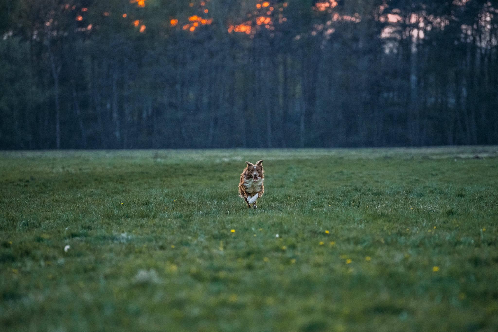 Marcel at dusk-001
