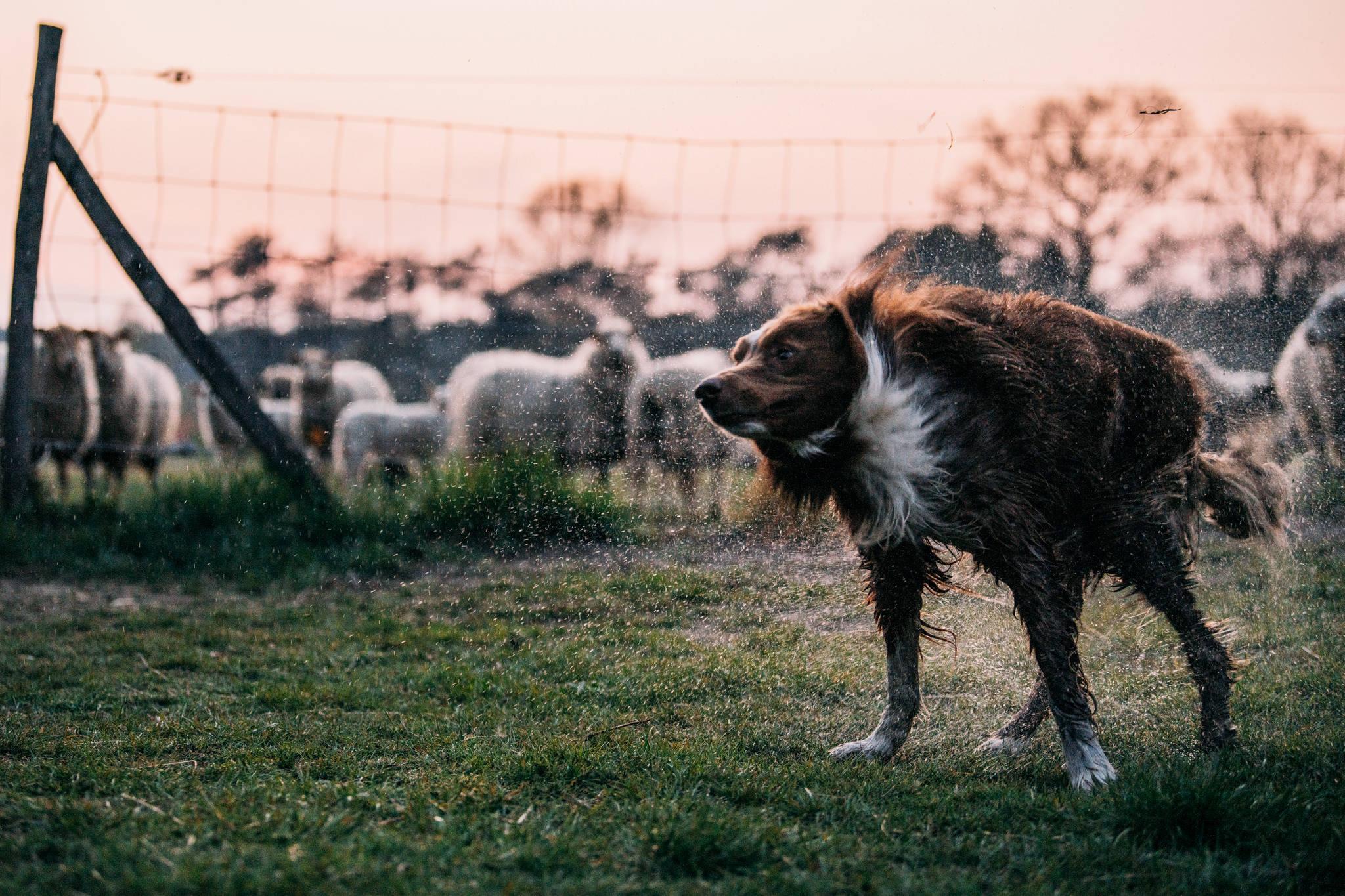 Marcel at dusk-061
